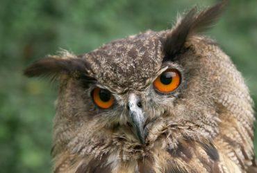 Zeitlupentest mit Falken, Eulen und Adlern