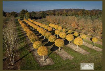 Posterserie Bäume